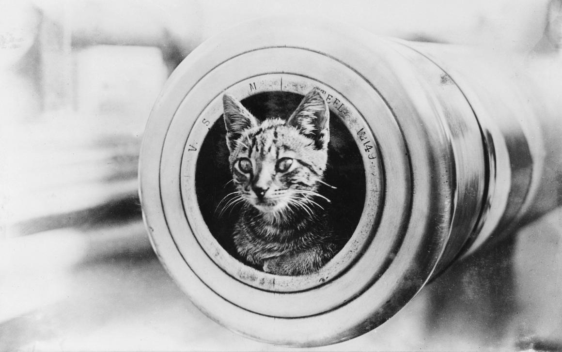 The feline mascot of the light cruiser HMAS Encounter, peering from the muzzle of a 6 inch gunAustralian War Memorial