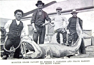 Otago Witness, 23rd March 1904 Courtesy of Allied Press