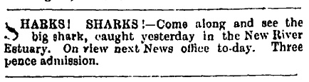 Southland Times, 29th February 1904 Papers Past